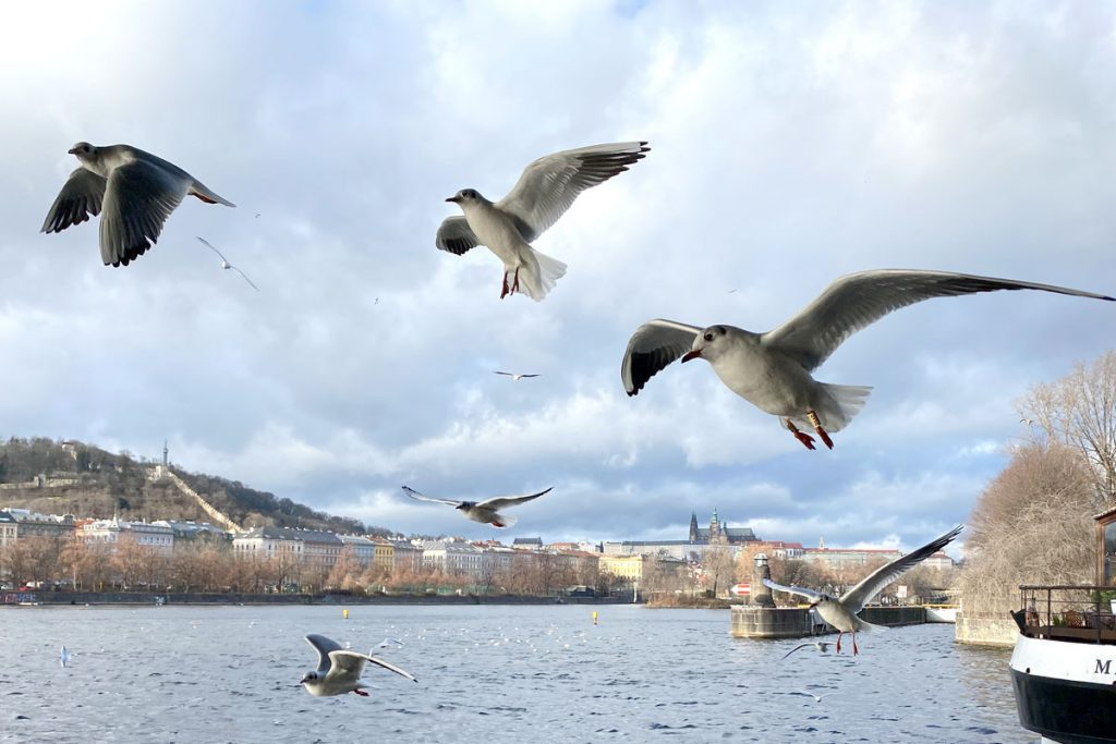 jak fotit ptáky